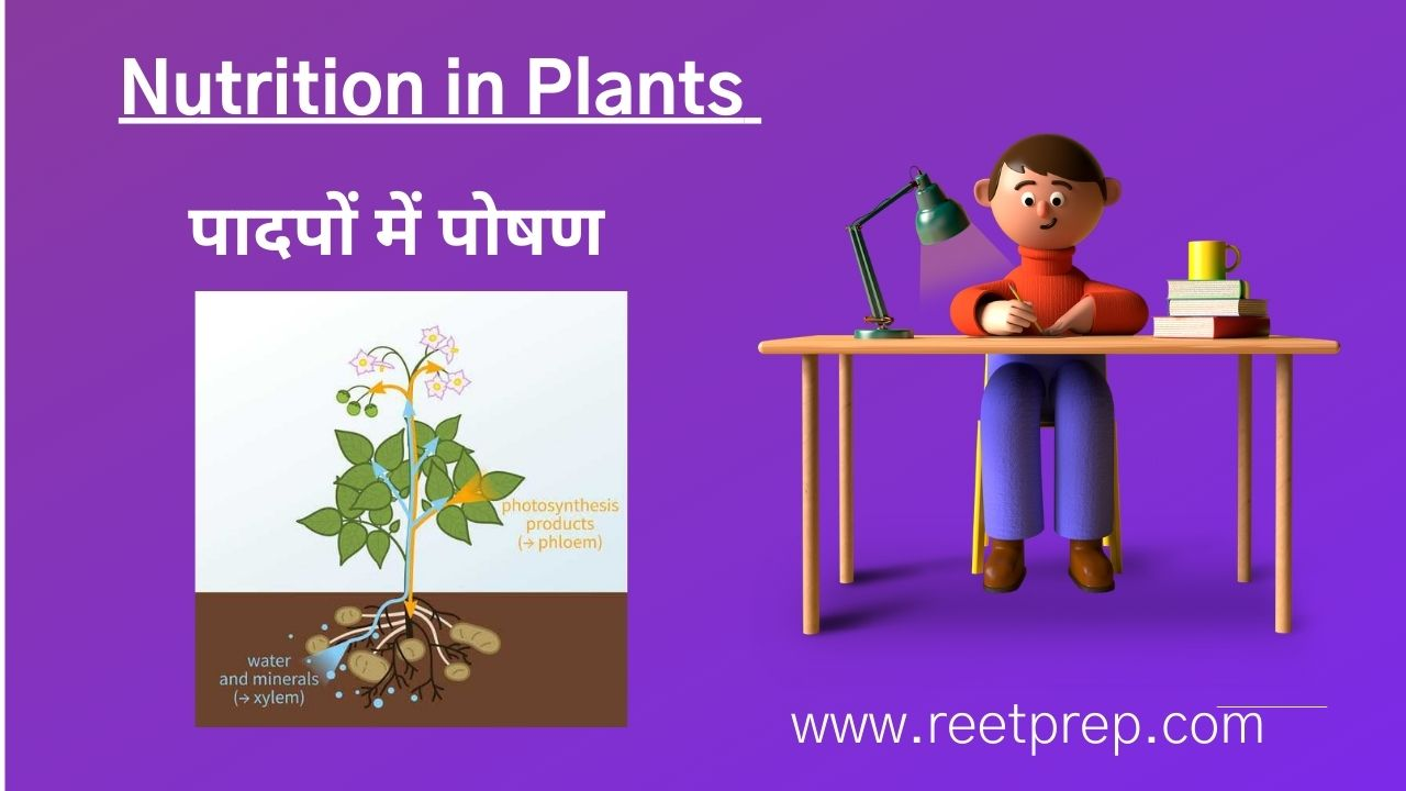 Nutrition in Plants